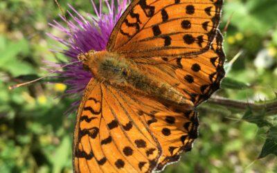 """Illustrations Workshop """"Schmetterlinge"""""""